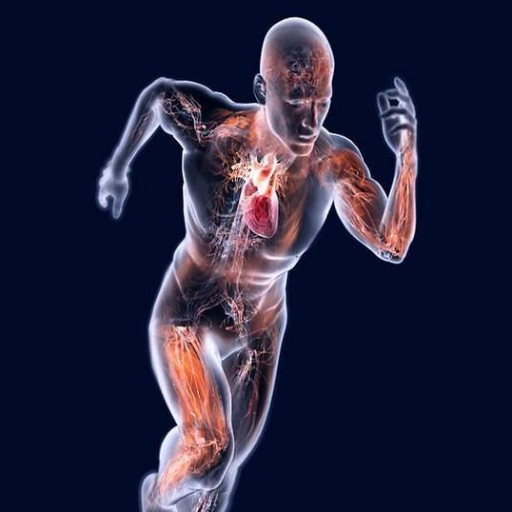 adattamenti-cardiovascolari-news-aipt