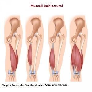 muscoli-ischiocrurali